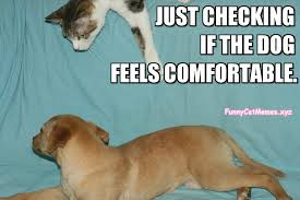 Funny Cat And Dog Memes - just checking the dog funny cat meme
