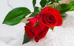 red roses flower beautiful red wallpaper angelic hugs