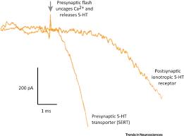 monoamine transporters as ionotropic receptors trends in