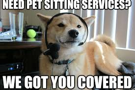 Cat Sitting Meme - need pet sitting services we got you covered customer service