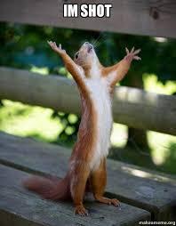 Meme Shot - im shot happy squirrel make a meme