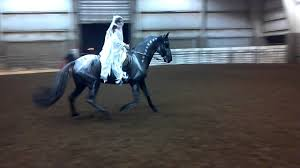 bubbles halloween costume ghost rider horse costume with bubbles and sequoia youtube