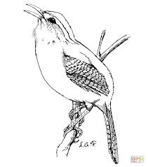 house wrens coloring page free printable coloring pages
