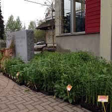 native plant sale muskoka conservancy seedling day