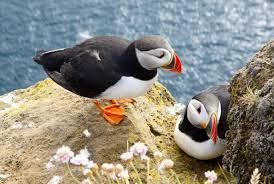 best bird watching destinations in europe europe u0027s best destinations