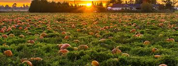 Local Pumpkin Patches Best Pick Your Own Pumpkin Patches In The Fort Smith Area