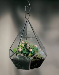 terrariums herbs under glass