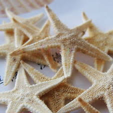 starfish decorations starfish shells ebay