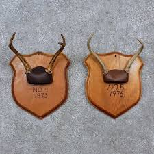 whitetail deer antler plaque mounts for sale 15671 the