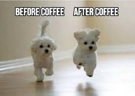 Good Morning Cat Meme - funny good morning memes 2 50 best