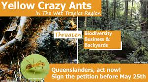 far north wilderness bike tour cafnec yellow crazy ants queensland e petition cafnec