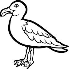 clipart of a seagull bird