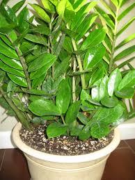 Best Houseplants A Guide To Northeastern Gardening Best Houseplants For Indoor