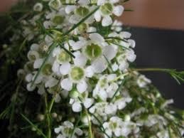 Discount Flowers Bulk Discount Flowers White Wax Flower
