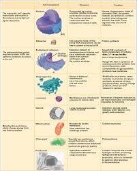 cell and their organelles worksheet worksheets