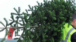 how to recycle christmas trees in each london borough london