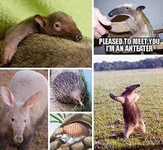 Anteater Meme - hot licks the world s 10 most amazing anteaters webecoist