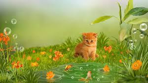 kitten spring wallpaper images collection of kitten spring