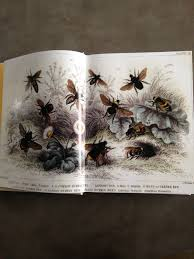 book review the beekeeper u0027s bible tomato envy tomato envy