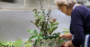 mt cuba how to make arrangement that brings garden in