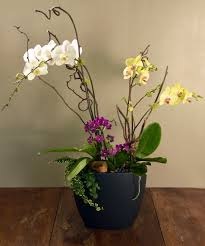 san mateo florist same day delivery since 1933 ah sam florist