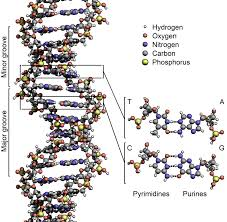 122 the structure of dna worksheet answers the best and most