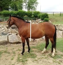 horse saddle home