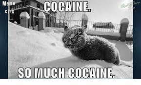Cat Cocaine Meme - meme cocaine cats so much cocaine meme on me me