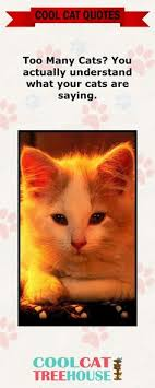 Awesome Quotes About Cats Being - cat quotes page 13 commentsmeme com cat quotes 4 tracy