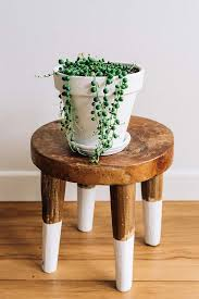Plants Easy To Grow Indoors 11 Best Indoor Vines And Climbers You Can Grow Easily In Your Home