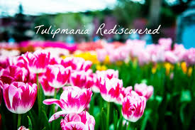 Ottoman Tulip by Tulipmania Rediscovered 2016 The Ottoman Empire Roots The