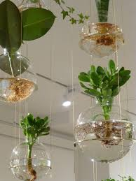 beautiful hanging plant installation michael anastassiades