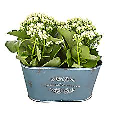 plant delivery next day plant delivery free delivery serenataflowers