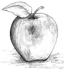 apple drawing black and white clipart