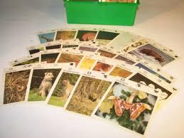 wildlife treasury cards illustrated wildlife treasury wildlife cards in box what s it worth