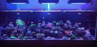 sb reef lights review sb reef lights light light info