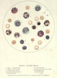 Structural Features Of White Blood Cells Physical Appearance Of Human Red Blood Cells White Blood Cells