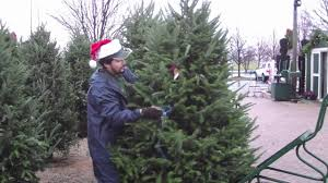 fresh cut christmas trees platt hill nursery youtube