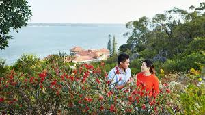 kings park native plant sale local u0027s guide to kings park perth tourism australia
