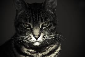 black metal cats on twitter