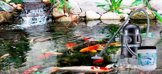 Backyard Fish Pond Kits by Pond Solutions 1 Pond Supplier For Fish Ponds Water Gardens
