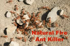 fire ant killer that works fast with no chemicals the healthy