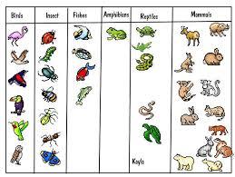 best 25 animal classification activity ideas on pinterest