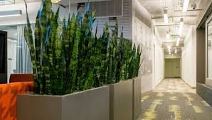 plants for office plant indoor plant decor beautiful small office plants our
