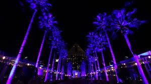 walt disney world swan and dolphin resort palm tree lights