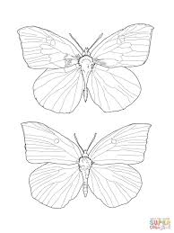 buckeye butterfly coloring page free printable coloring pages