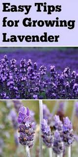 466 best gardening ideas images on pinterest easy diy projects