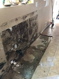 black mold isn u0027t the only type of toxic mold causing symptoms