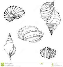seashell sand set hand drawn stylish summer stock images image