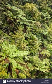 new zealand native plants and trees new zealand native bush waitakere ranges auckland region